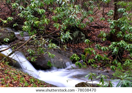 White Oak Run, Brook Trout Stream, Rhododendron, Monongahela National Forest, Webster County, West Virginia, USA - stock photo