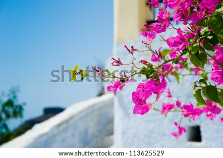 White old house and flowers at Santorini island,Greece