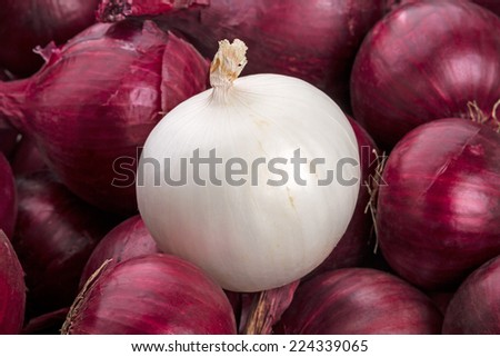 White onion on a background of red onions - stock photo