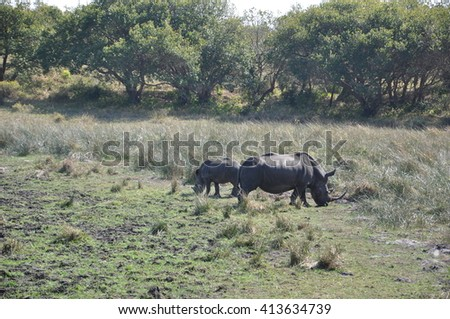 White or wide mouth rhinio at the Isimangaliso wetland ark, St Lucia, South Africa - stock photo