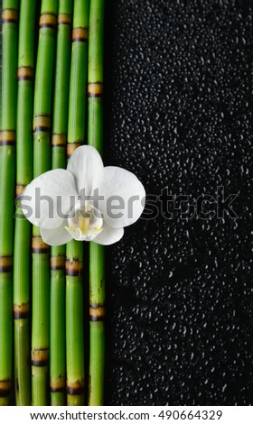 White orchid and bamboo grove on wet