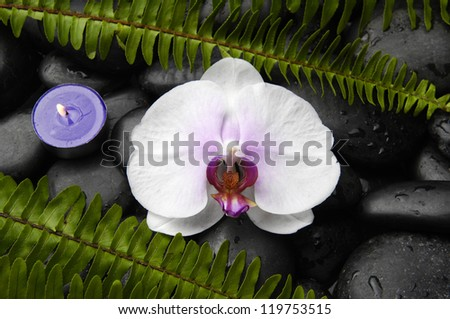 White orchid and stones with green fern and candle on pebbles