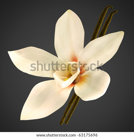 White orchid and vanilla beans with clipping path