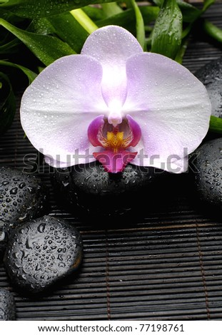 white orchid and zen Stones with green plant on mat - stock photo