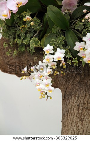 White orchid blossoming   - stock photo
