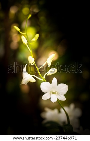 white orchid branch in a garden - stock photo