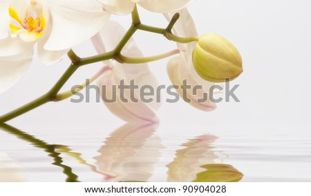 White orchid bud above water - stock photo