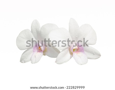 white Orchid clipping path