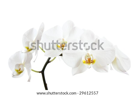 White orchid closeup against pure white, focus on the pistil. Clipping path included