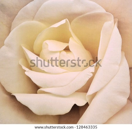 White orchid flower painting - stock photo