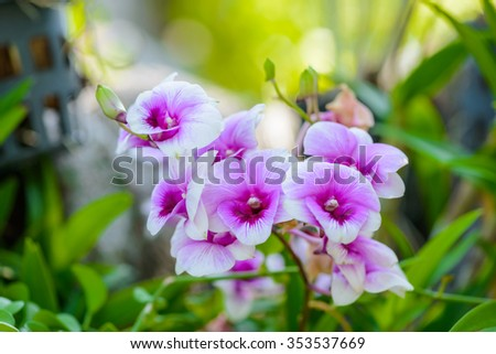White orchid flowers hang on the tree - stock photo