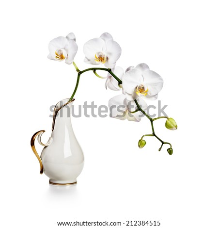 White orchid flowers in retro vase isolated on white background - stock photo