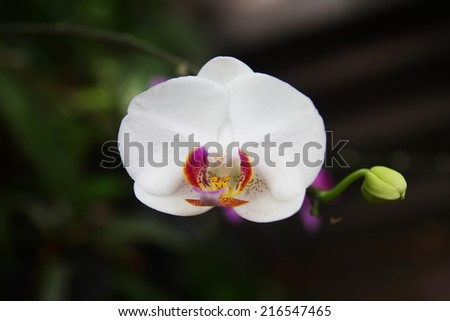 White orchid in orchids garden of Thailand