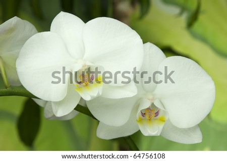 white orchid on green