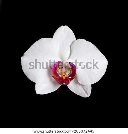 White orchid on the black background, isolated