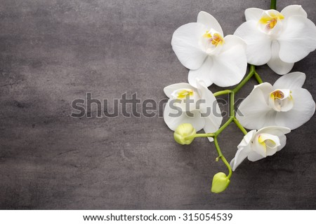 White orchid on the grey background.