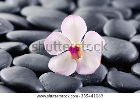 White orchid on zen black stones  - stock photo