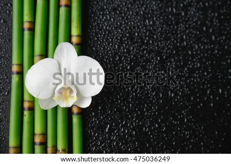 White orchid with bamboo grove on wet