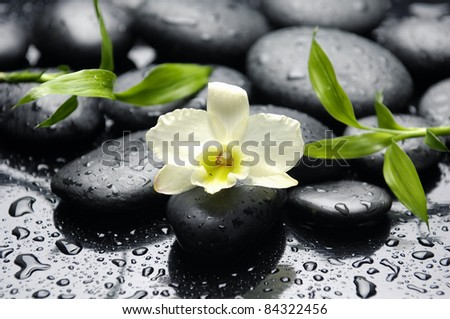 white orchid with bamboo leaf on zen stones