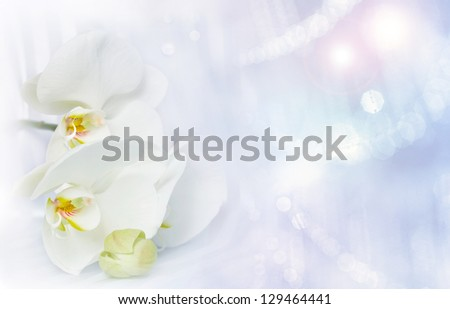 White orchid with lights