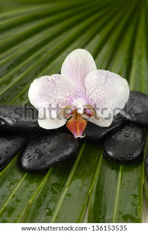 White orchid with wet spa stones on palm leaf texture