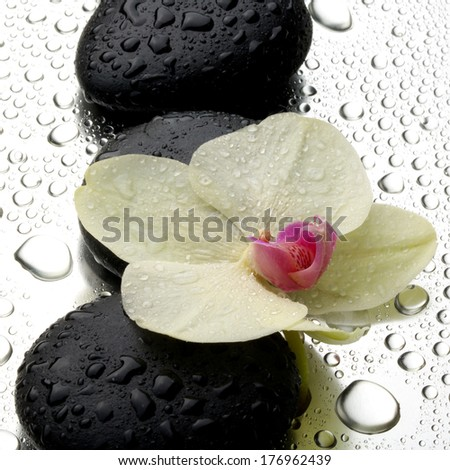 White orchid with zen stones on wet  background - stock photo