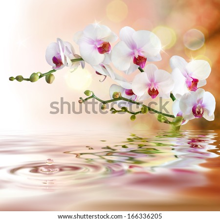 white orchids on water with drop - stock photo