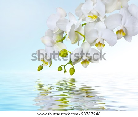 White orchids reflecting in water - stock photo