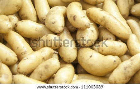 White organic potatoes from a green farm for background - stock photo