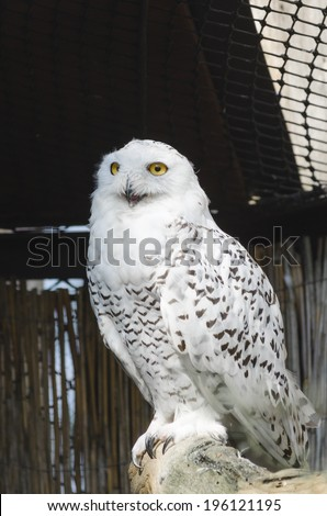 White owl in aviary - stock photo