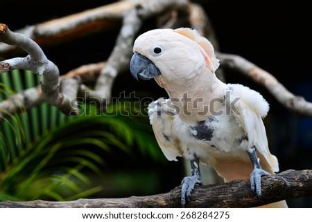 White parrot - Scarlat Macaw - stock photo