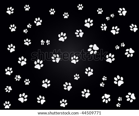 white paw prints on black