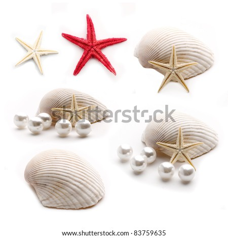 white pearl in a shell on a white background. Seashell collection isolated on white background. - stock photo