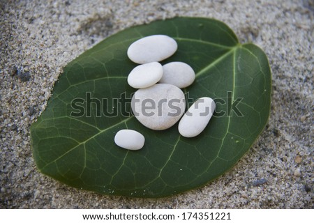 white pebbles on green leaf