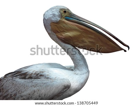 White pelican standing proud isolated over white background - stock photo
