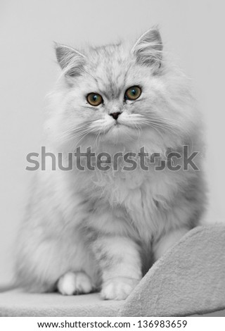 white persian cat on bed - stock photo