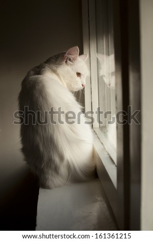 White Persian cat on the window sill - stock photo