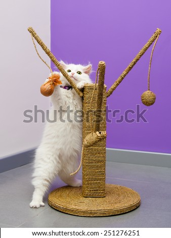 White persian kitten playing with the scratching climber toy - stock photo