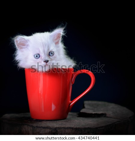 White persian  kitten within red cup, lowkey  light - stock photo