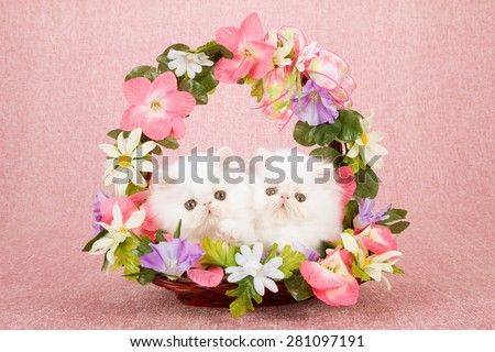 White Persian kittens sitting inside basket decorated with silk flowers on pink background