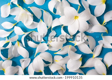 white petal with blue background - stock photo