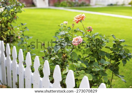 white picket fence and pink roses - stock photo