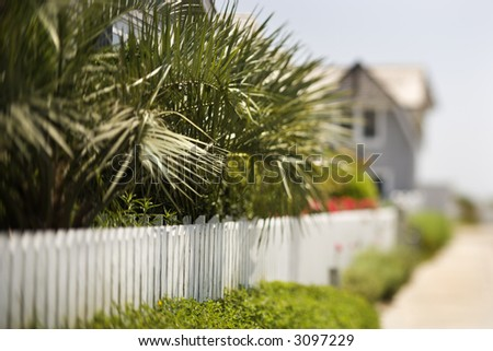 White picket fence with palms. - stock photo