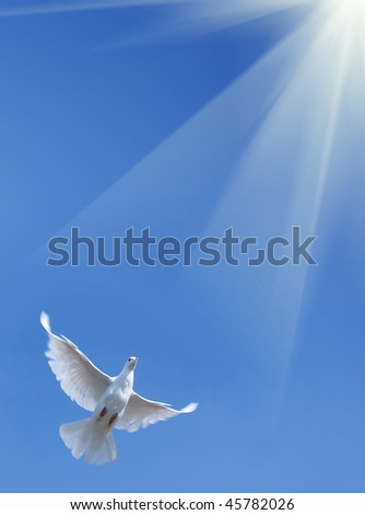 White pigeon against the blue sky