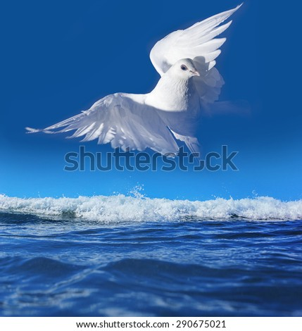 white pigeon and sea - stock photo