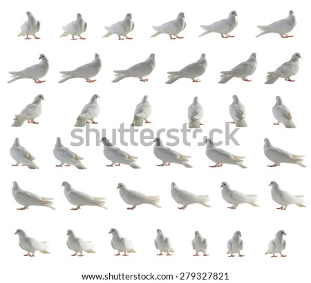 white pigeon removed around on 360 degrees in 36 positions - stock photo