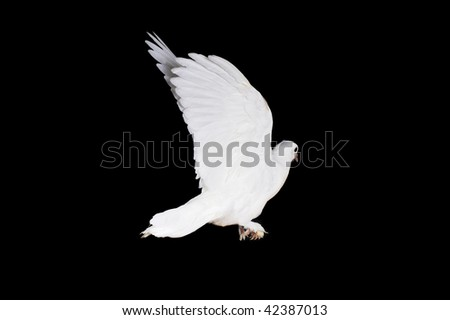 White pigeon sit on  wooden crossbeam close up