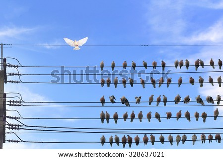 White Pigeon was graceful wings energetically stand on the highest wire and a group of dark pigeons standing on wire bottom. Smart Leadership concept dignified courage.  - stock photo