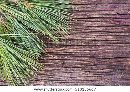 White pine tree boughs background for seasonal Christmas