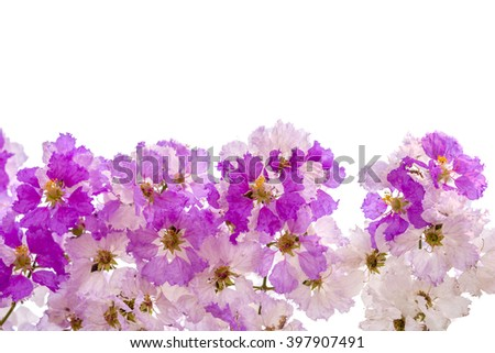 White & Pink flowers blooming background isolated on white